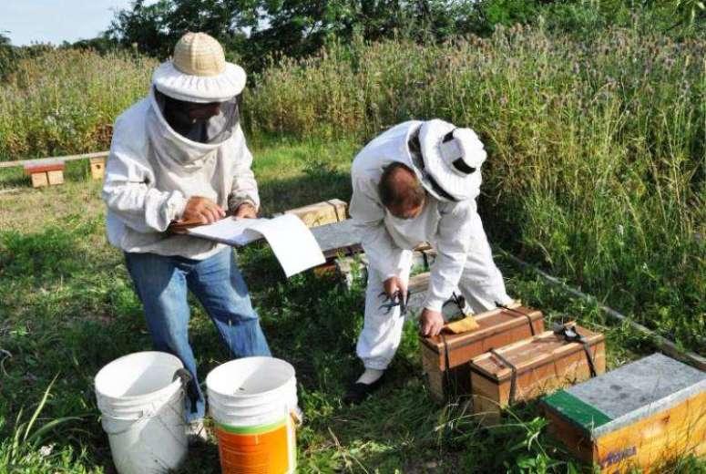 apicultores.jpg